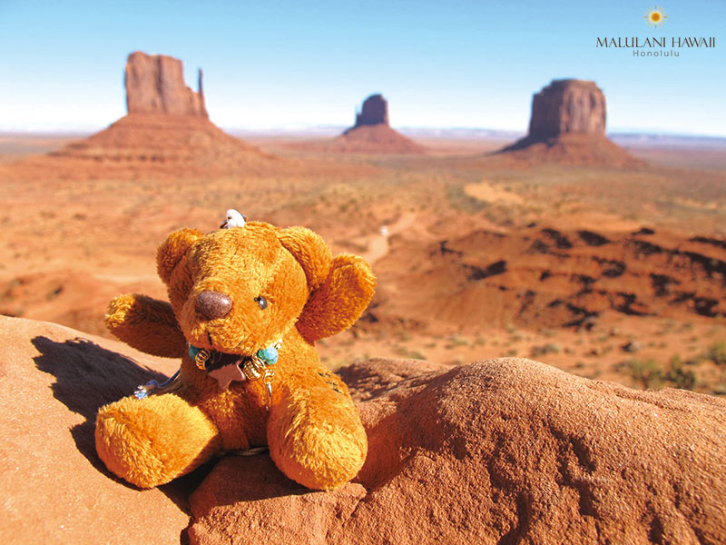 Arizona Aloha Bear